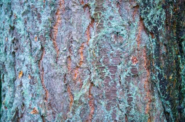 bark dirty rind rough